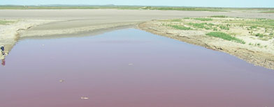 Thousands of dead fish float in a few feet of dark red water that some are saying is a sign of end times.